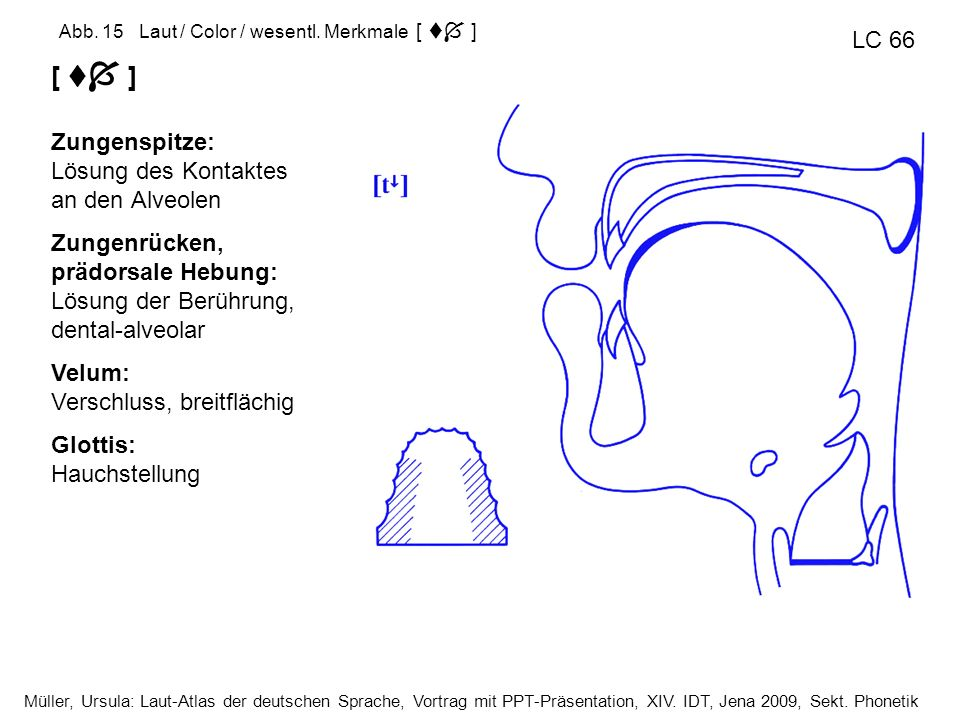  [  ] LC 66 Zungenspitze: Lösung des Kontaktes an den Alveolen